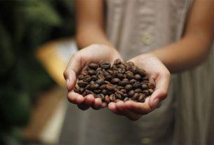 marc de café dans son jardin
