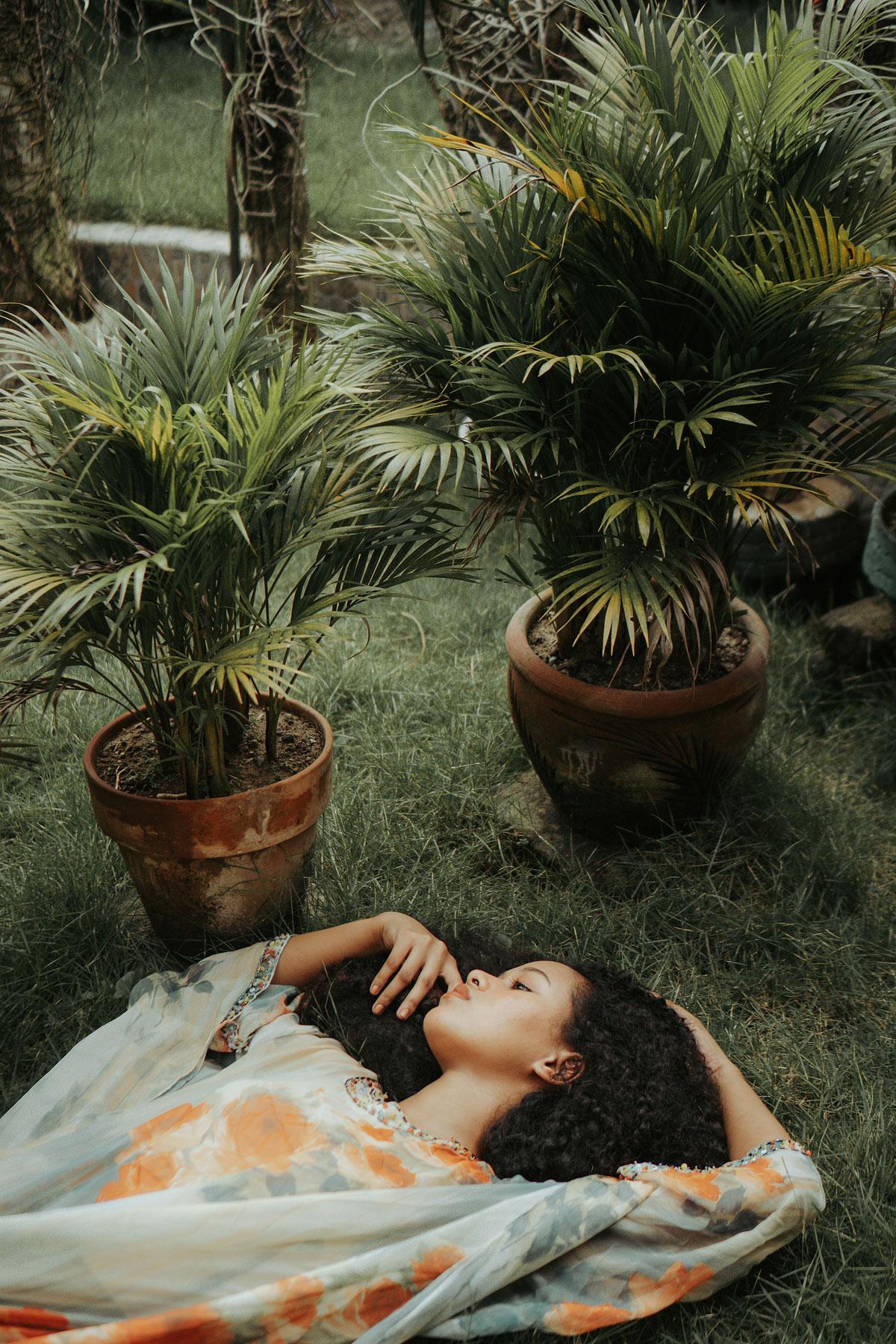 palmier nain en pot